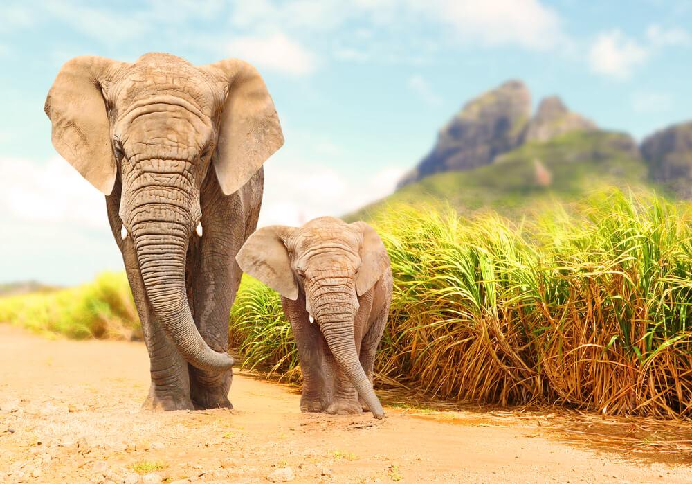 Elefantenkuh-mit-Kalb