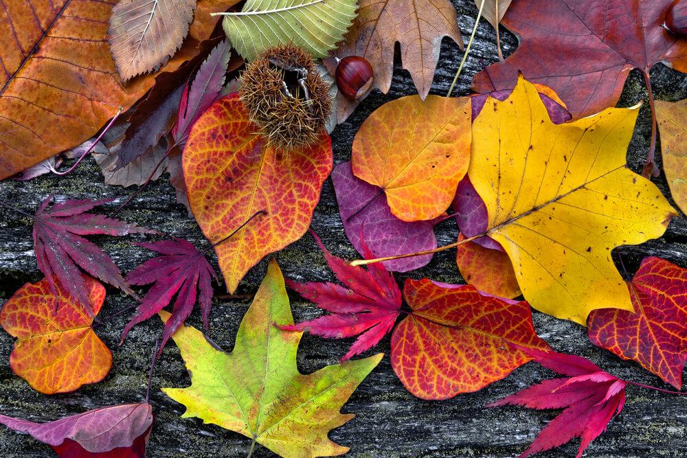 Buntes-Herbstlaub
